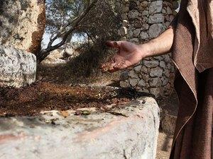018-olives-olivepress